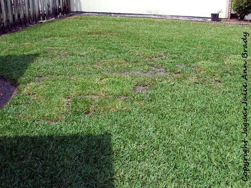 front yard accent garden plot area with sod