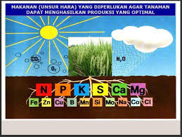 Macro and Micro Nutrients needed by plants
