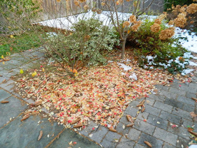 St. Clair West Village Fall Backyard Cleanup Before by Paul Jung Gardening Services--a Toronto Gardening Services Company