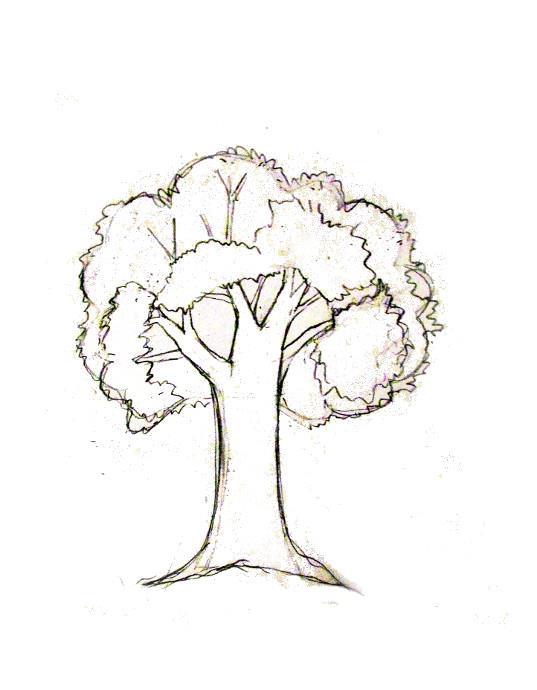 Gambar Pohon Psikotes : gambar, pohon, psikotes, Psikotes, Menggambar, Pohon, Dunia, Kerja