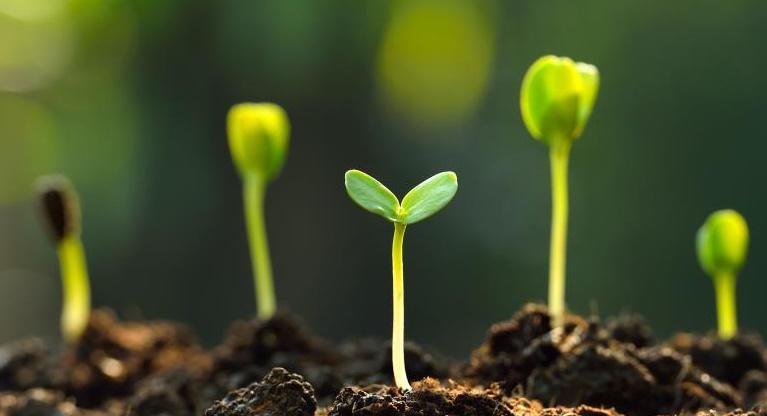 """Os ambientalistas chegaram a declarar o dióxido de carbono como um """"poluente"""", mesmo quando é a molécula mais importante para apoiar a fotossíntese e quase toda a vida das plantas em todo o planeta."""
