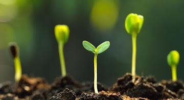 Mike Adans da uma lição de ciência - Os ambientalistas loucos declaram guerra à fotossíntese para exterminar toda a vida do planeta Terra