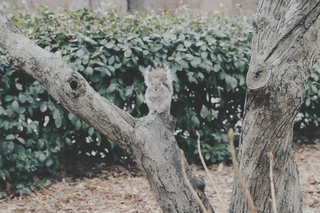 écureuils new york incontournables et insolites