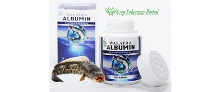 Albumin | 100% Ekstrak Ikan Gabus