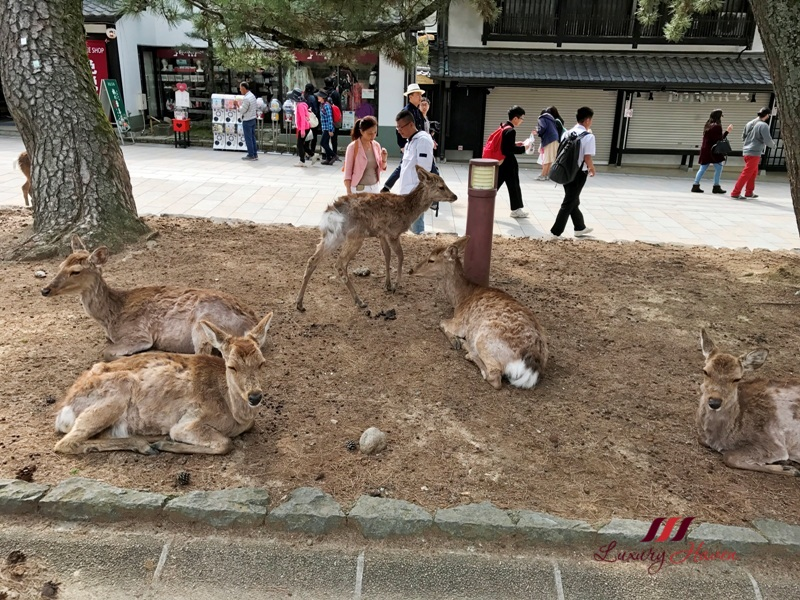 osaka nara park sightseeing guide wild deer