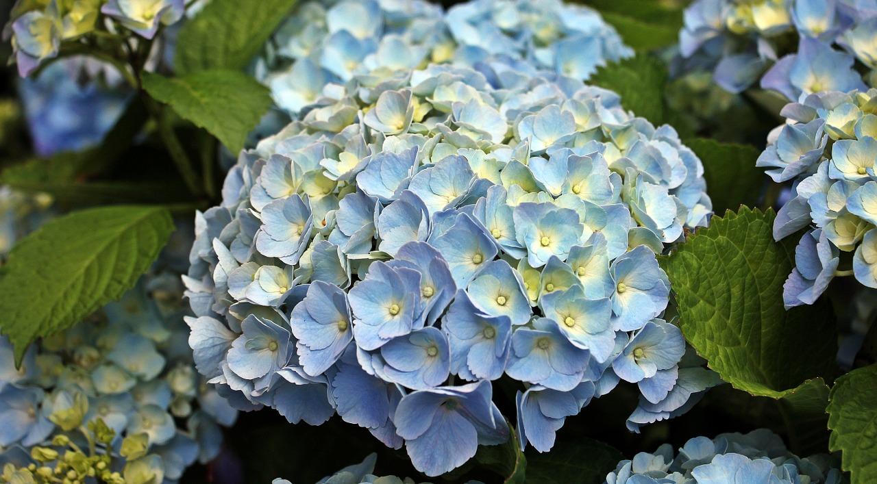 Fabulous Plants For Your Fabulous Garden Annmarie John A