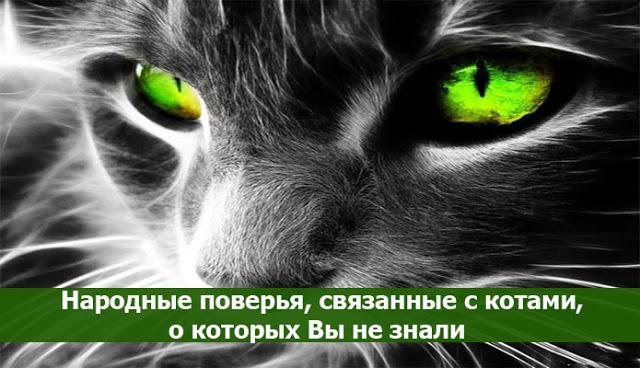 что означает когда в дом приходит не знакомый кот