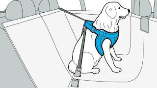 transporte de cães de grande porte