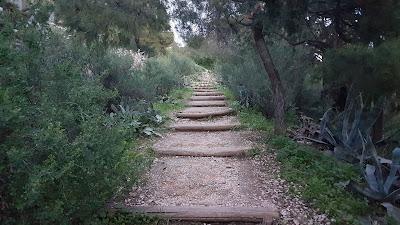 Licabetto Hill