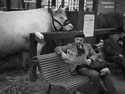 George orwell shooting an elephant essay