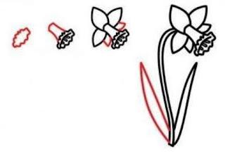 Cara menggambar bunga Bunga Bakung – Daffodil Flower