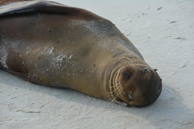 Gardner Bay Sea Lions