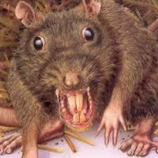 Rats don't belong in attics