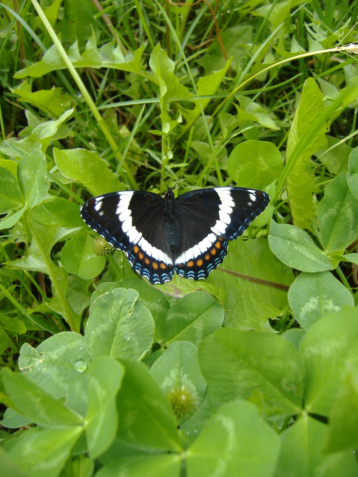 Garden Therapy: Beautiful Butterflies
