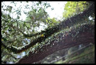 Nikon D800 + KERLEE 1.2/35 – ISO 100 f/1.2 1/250s