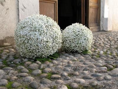 Forever Wedding Planner Un fiore elegante e versatile la