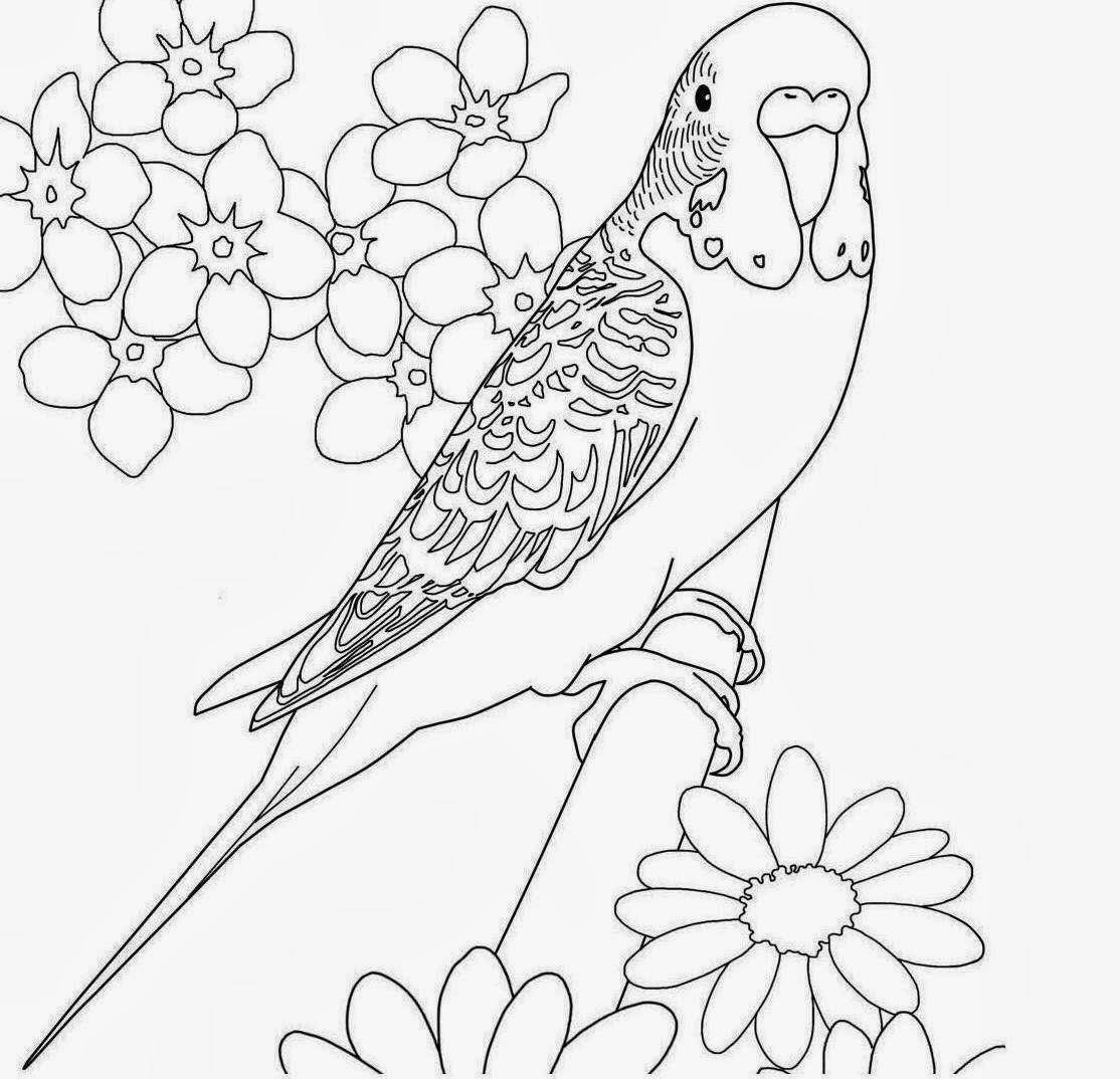colours drawing wallpaper beautiful bird parrot coloring