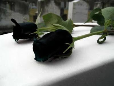 crne ruže mogu se naći samo u Turskoj