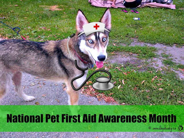 National Pet First Aid Awareness Month - Are you Prepared?