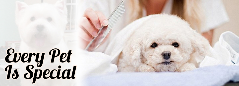 Fulfilling The Needs Of Pet Animals With The Best Care Services 1