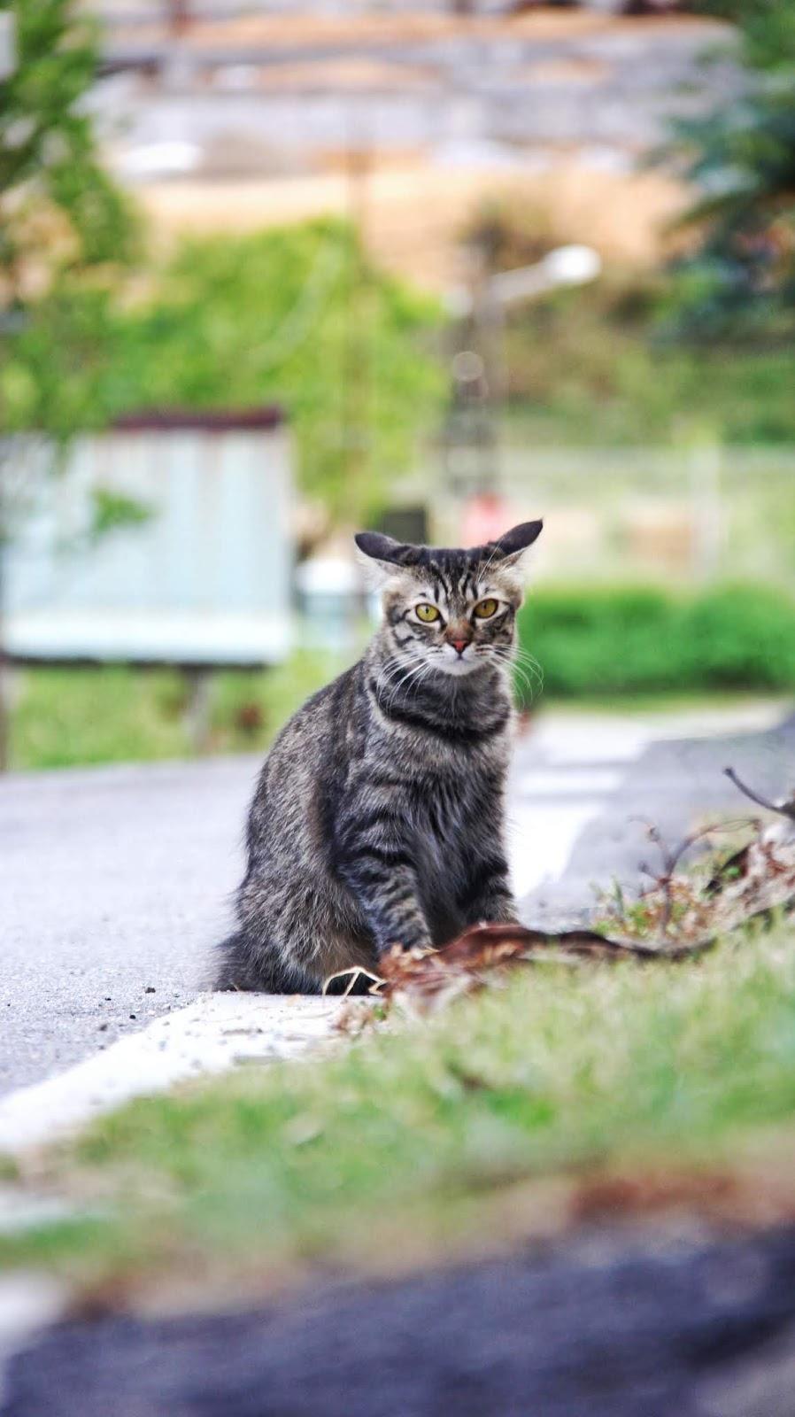 20 Koleksi Gambar Kucing Comel Bernama Tambi 7