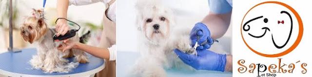 Pet shop ideal é o seguro para seu animal de estimação