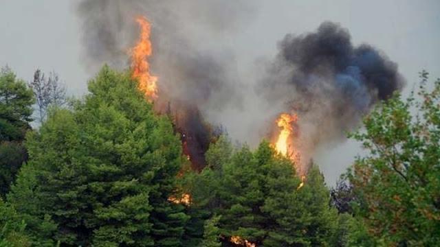 63 δασικές πυρκαγιές σε όλη τη χώρα σε μια ημέρα