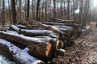 Gefällte Baumstämme liegen schneebedeckt am Wegesrand