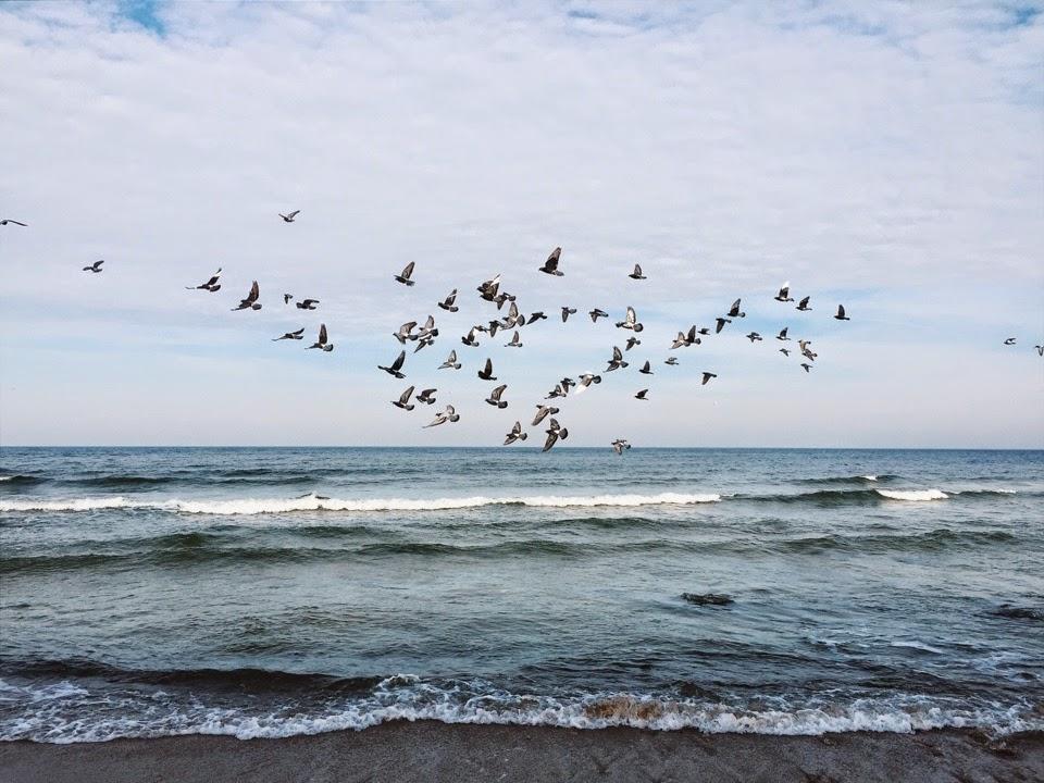 птицы на фоне моря