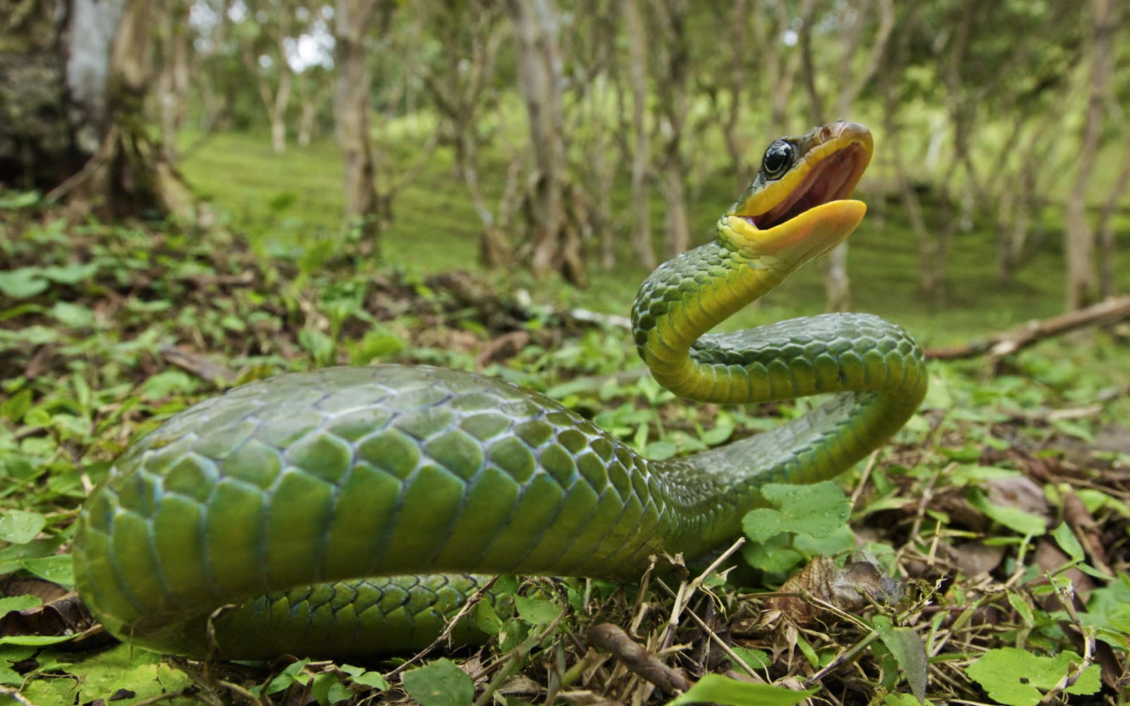 Download Free Hd Wallpapers Of Snakes For Android