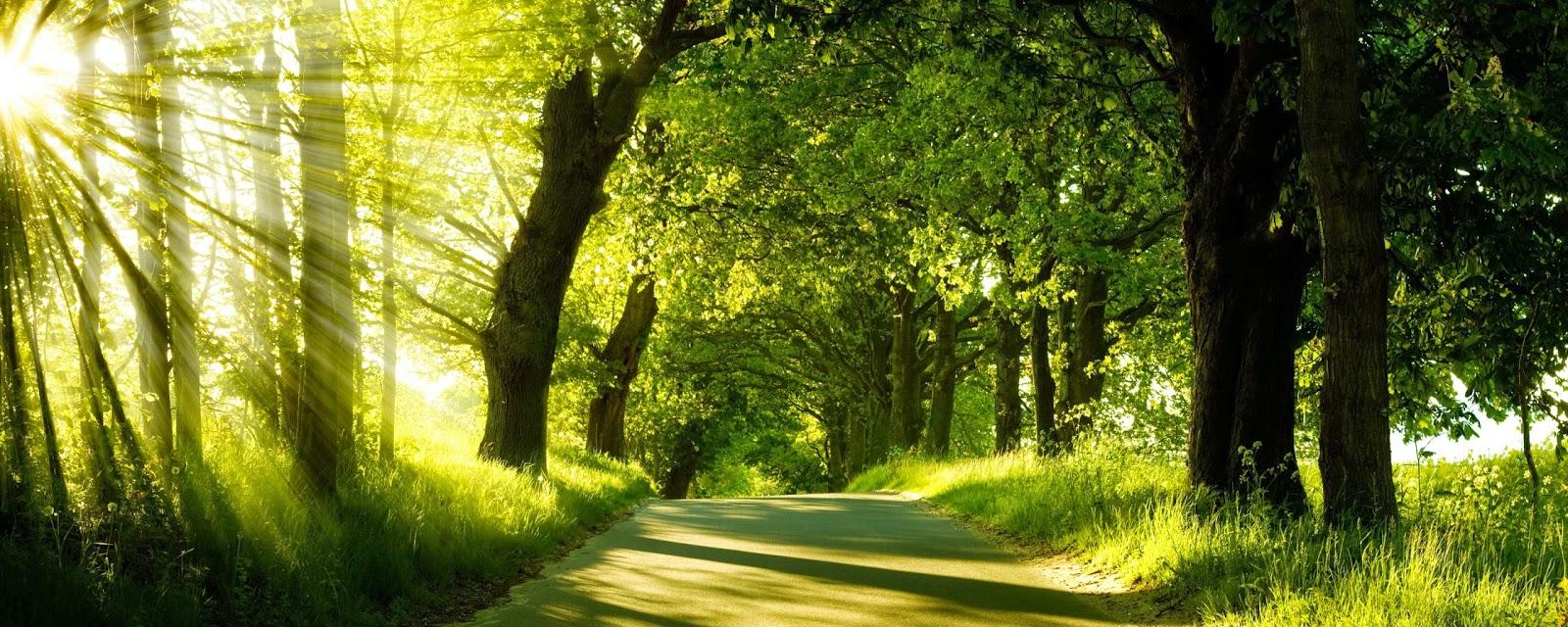 Best Nature Photos For Desktop