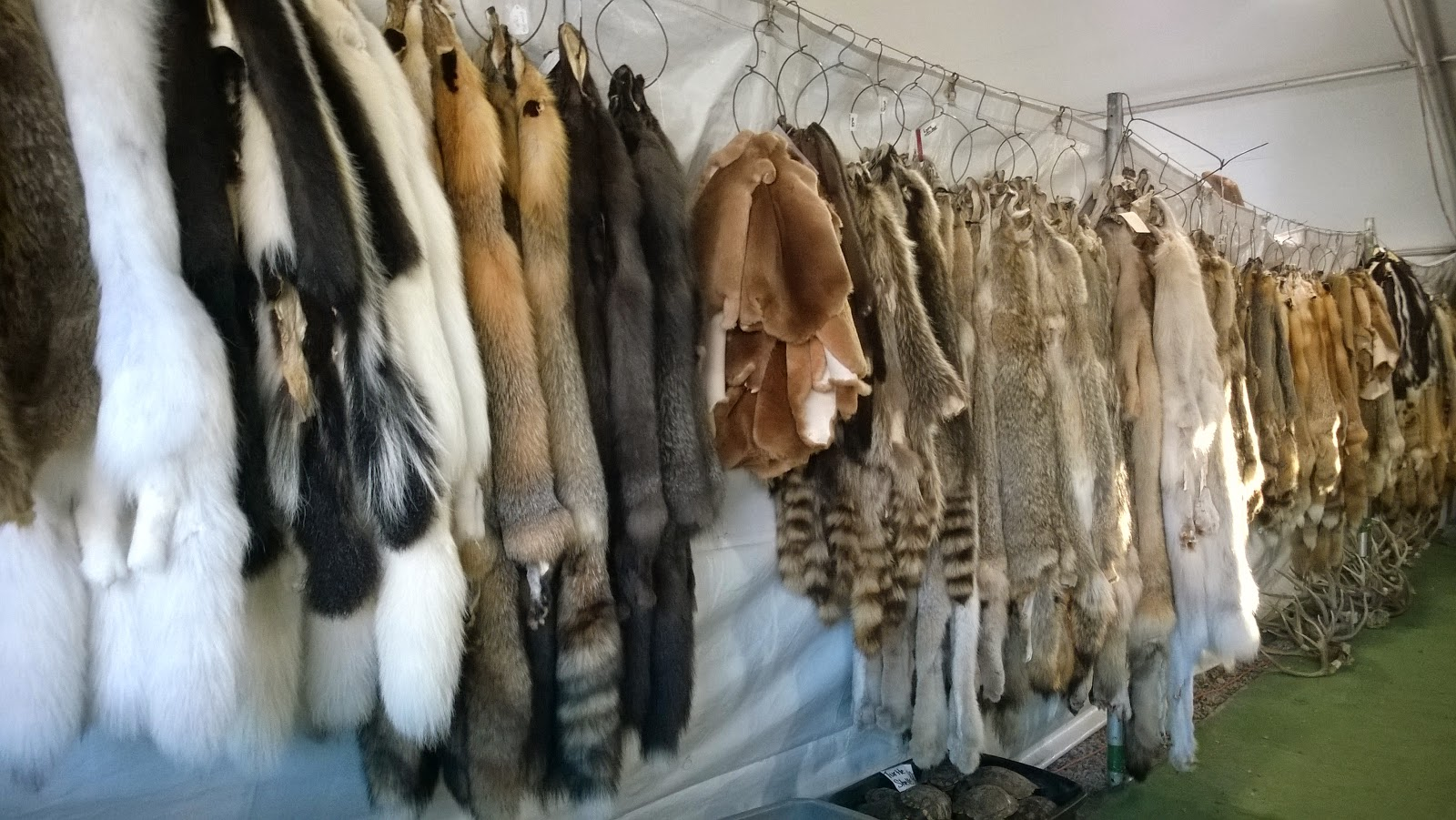 Full animals hides: fox, raccoon, coyote, blue fox, muskrat