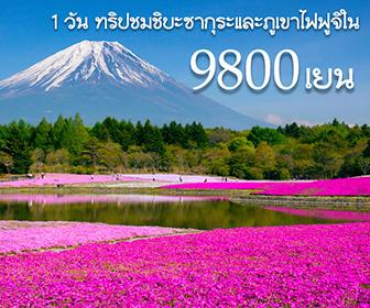 ทริปชมชิบะซากุระหรือพิงค์มอสและภูเขาไฟฟูจิใน 1 วัน