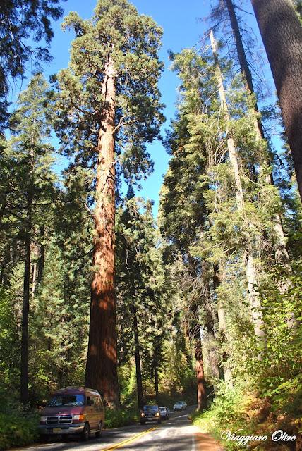 Visitare il Sequoia National Park