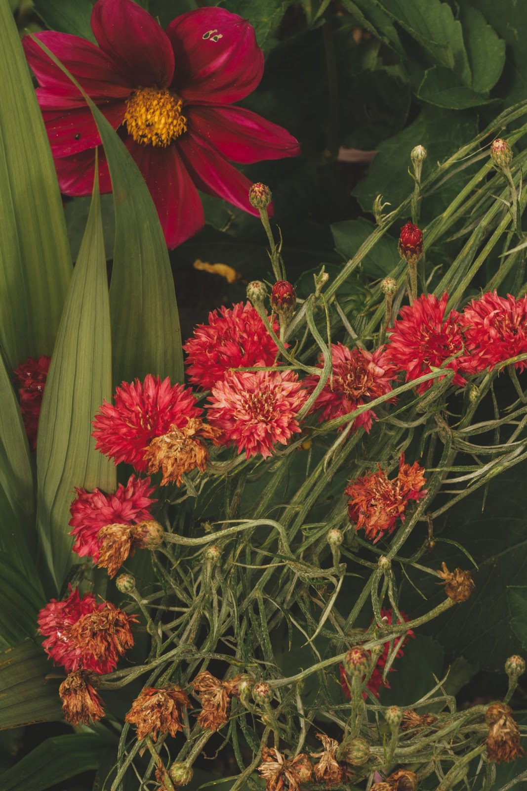 Monet\'s Garden April 8, 2018 | ZsaZsa Bellagio - Like No Other