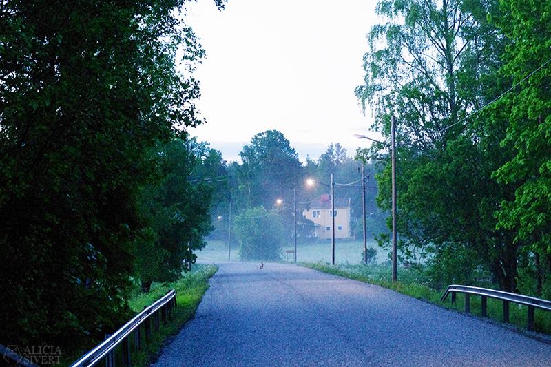 uttersberg dimma fog dusk skymning sommarkväll sommarnatt kväll äng gräs grass dagg hare väg