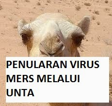 Bukti Virus MERS Ditularkan Unta Ke Manusia
