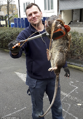 picture of giant rat found in london hackney
