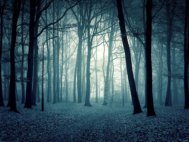 Wallpapers Twilight Forest