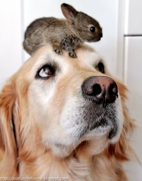 Dog and small bunny.