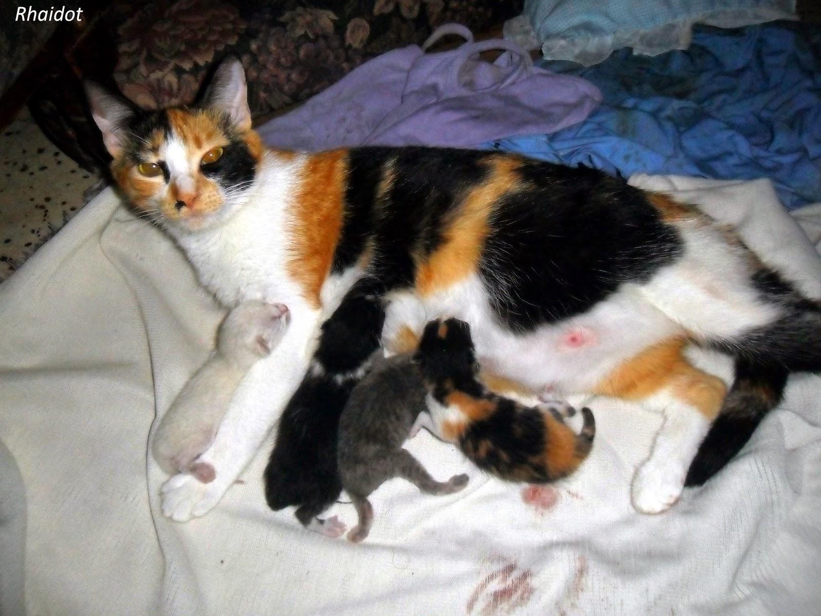 Mi gata tuvo bebes y yo le ayudé