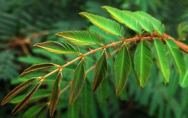 Gejala Alam Biotik dan Gejala Alam Abiotik