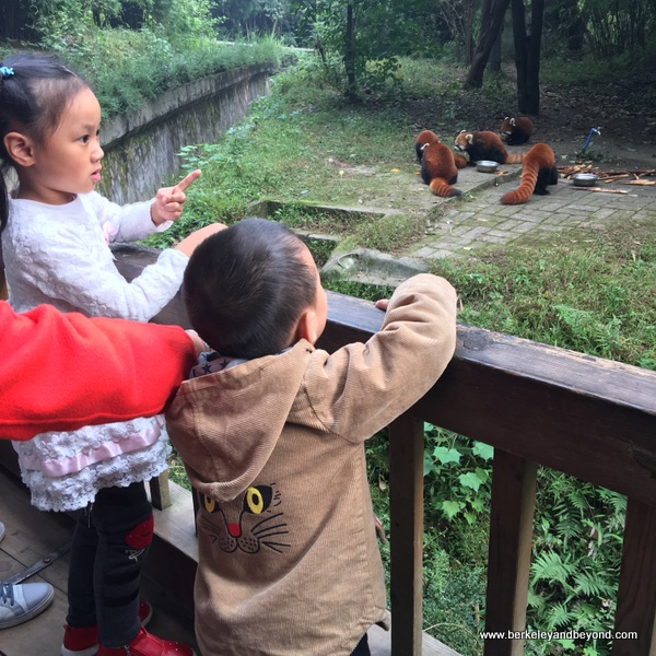 children watch red pandas at Chengdu Research Base of Giant Panda Breeding in Chengdu, China
