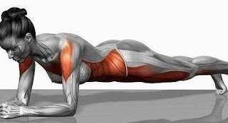 why we plank