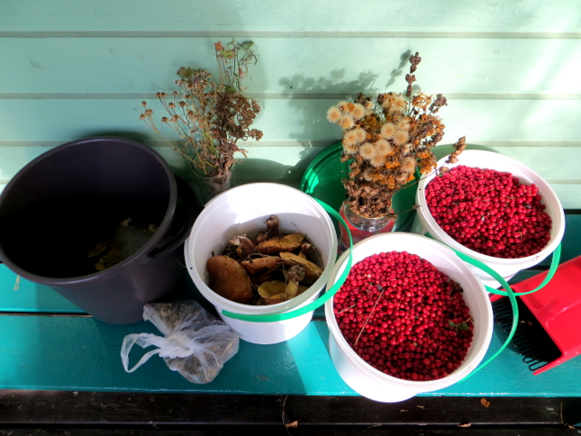 flower seeds lingonberries mushrooms