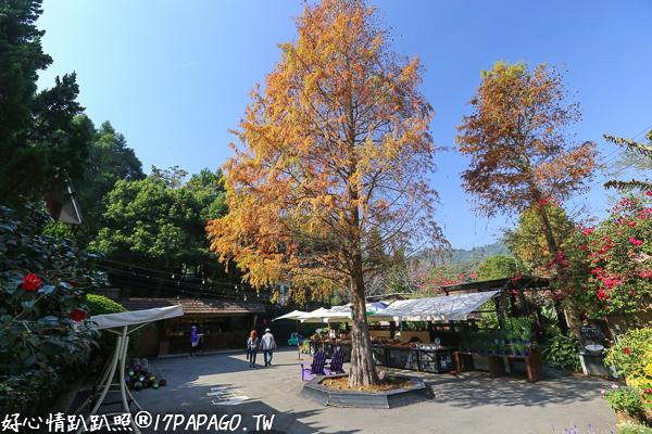 台中新社|薰衣草森林|香草舖子|森林咖啡館|森林島嶼|年輪郵局|旋轉木馬|森林美術館
