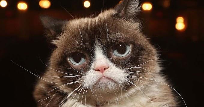 """وفاة """" القطة الغاضبة """" الأشهر والأغنى قطة في العالم"""