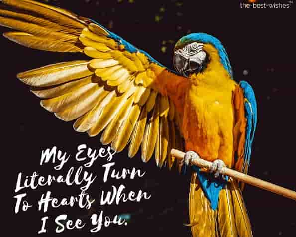 good morning love message with bird image