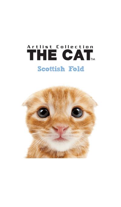 THE CAT Scottish Fold