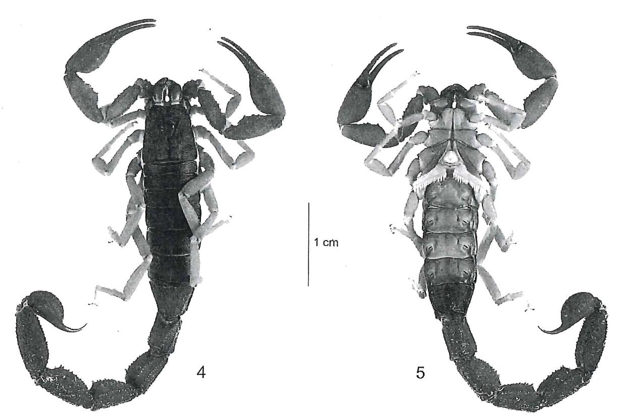 The Scorpion Files Newsblog: 2017
